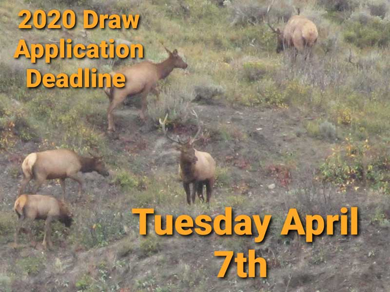 2020 Deadline for Big Game Limited License Draw Applications